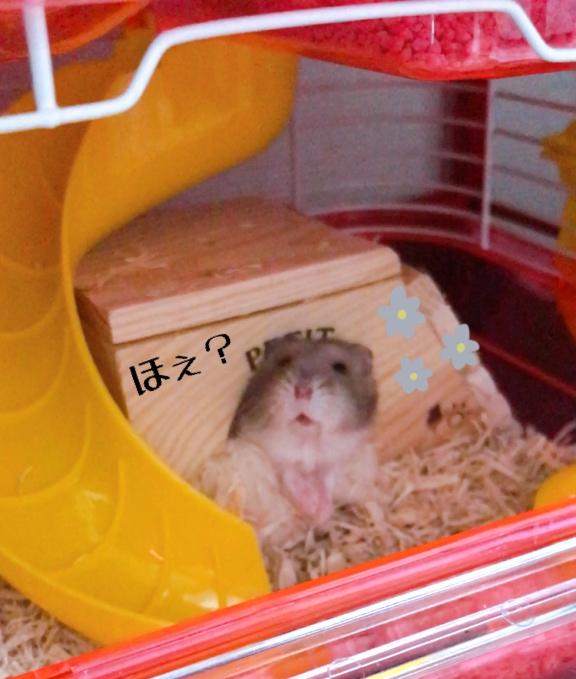 冬眠 ハムスター 擬似 ハムスターは冬眠する?動かない時の対処法と冬眠対策  
